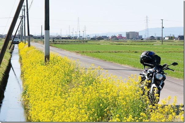 道の駅うきは近くの菜の花ロードとバイク