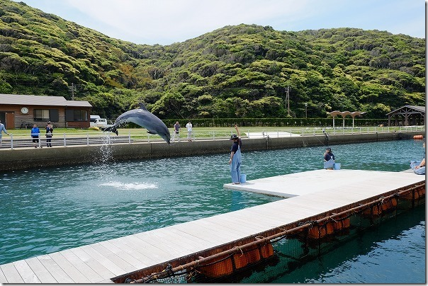 壱岐イルカパーク&リゾートのイルカショーの練習