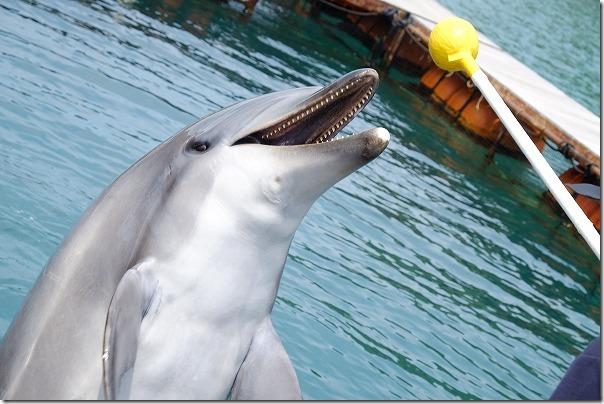 壱岐イルカパーク&リゾートのイルカ