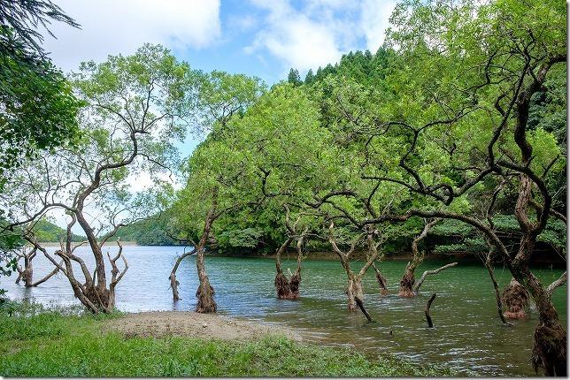 糸島、不動池で水面からでた木が神秘的