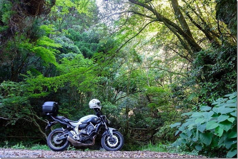 嘉瀬川ダムと天山の間くらいの清流、散策ツーリング