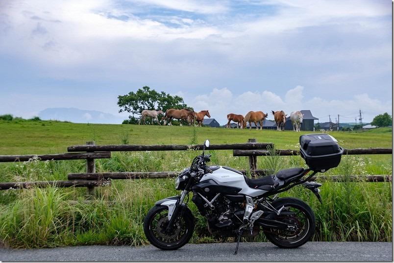阿蘇ツーリング、MT-07と馬